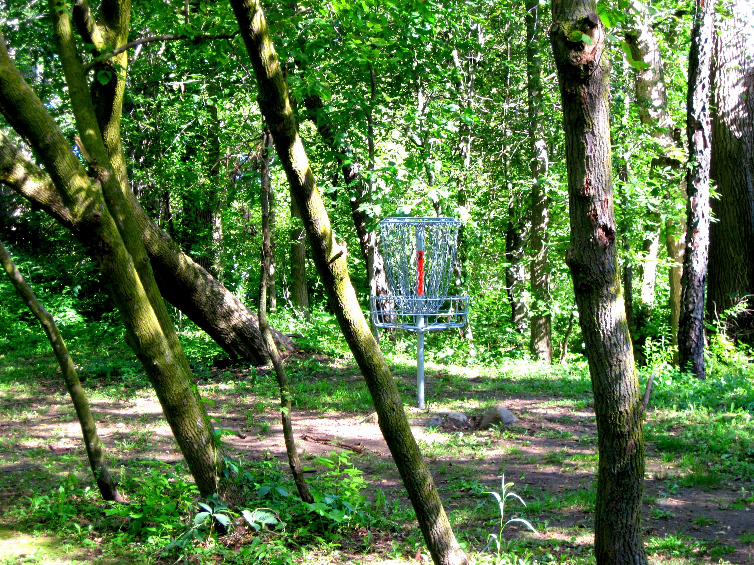 Disc Golf Chains in a Wooded Area